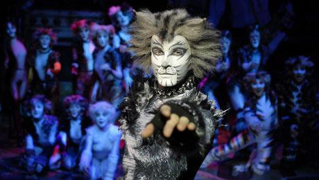 The cast of CATS (photo from www.atgtickets.com)